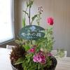 モネの庭の季節の寄せ鉢