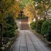 11月13日 東大井から西大井までの猫さま歩き とその情景