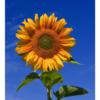 【R言語での画像処理シリーズ(その1)】R/EBImageとかを使った画像処理(読み込み、表示、リサイズetc)をやってみた件
