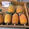 【アソーレス諸島】サンミゲル島での食事を一挙に紹介(2)