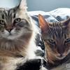 猫が朝起こしてくれるのはいいんだけど後頭部をひたすら舐めるヤツやめて! 剥げちゃうでしょ!