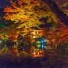醍醐寺の紅葉2020、見ごろや現在の状況。ライトアップあり。
