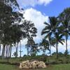 聖地クカニロコバースストーンで安産祈願 | ハワイのおすすめパワースポット