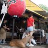 奈良の燈花会に行ってきました・・・。
