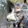 尾道の猫2013年:その②
