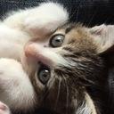 子猫のブログ