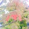 北海道の秋にないもの