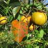 「まつこの庭」の秋の木の実・草の実