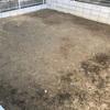 【MyGarden】固くて粘土質の庭土が土壌生物によって改良されてきた【途中経過】