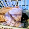 【アデノウイルス③】冬に大人も子供もかかる!発熱の期間や症状は?結膜炎にもなる!