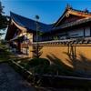 京都・紫野 - 石蕗咲く 大徳寺興臨院