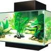 Fluval Edge 6 gallon aquarium is a great decor for your home