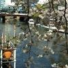 JR根岸線 大岡川の桜 2010.4.8 PartⅡ