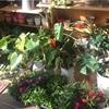 乾燥肌対策に観葉植物を導入してみようかなと。