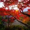 京都・西山 - 善峯寺の紅葉 早朝拝観