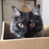 『家売るオンナ』と『家売らないネコ』。