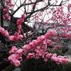 3月9日の満月写経の会は中止いたします