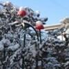 「積雪」が融けて、午後は「強風」が…。