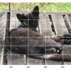 【Pythonプログラミング入門】画像をNumPyのarrayに変換する