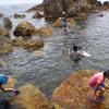 海の生き物を獲って食べるという自然体験学習 in 佐渡島