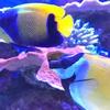写真でめぐる名古屋港水族館 5『サカナ』