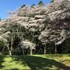 千葉の桜、満開予想