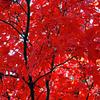 晩秋の北の大地〝十勝〟満喫体験の旅と休日⑨