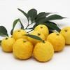 フレッシュな柚子を使ったカクテルレシピ3種を紹介します