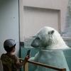 男鹿水族館GAO 「ホッキョクグマを見るなら今でしょ?」