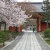 京都桜シリーズ 真如堂