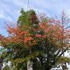今日の景色 11/02 桜の紅葉