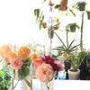 バラが少しずつ咲き始めました! 挿し木苗を鉢増し♪