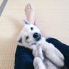 初めて犬を飼う人に知って欲しい「犬の十戒」と「十の質問」
