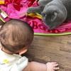 【ジョイントマットの上での我が子とネコ】ダイエット98日目(10月4日)