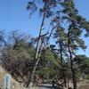 中山道 笠取峠松並木