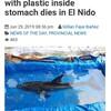 ダメな海洋プラスチックごみ問題の典型「ドルフィンが死す」