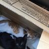 子猫を保護しました(鈴蘭台周辺)2、3匹目