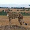 究極の利他主義は種の保存への貢献