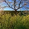 初夏(?)の陽気とロータリー作業と畦塗りとなたね油粕をまいたこと