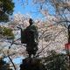 「小丸山城跡」でお花見