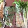 食材宅配サービスの「生活クラブ」と「らでっしゅぼーや」「オイシックス」の無農薬野菜の値段比較してみました。