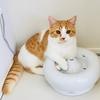 【猫学】寒くなると飲水量が減る?実際にわがやで取り組んでいる飲水量を増やす方法をご紹介。