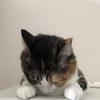 【愛猫日記】毎日アンヌさん#18