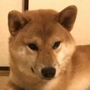 「目が見えない柴犬の新太郎」元保護犬の東京物語