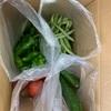 夏野菜を頂きました。