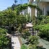 今の庭の様子