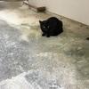 【まぅ助日誌②】優しさ溢れるクロ【猫】