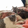 猫のあくびって可愛いですよね!
