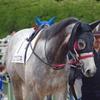 小倉芝2000m(2歳戦)種牡馬別ランキング