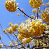 春爛漫 −大出山(ミツバ岳)−
